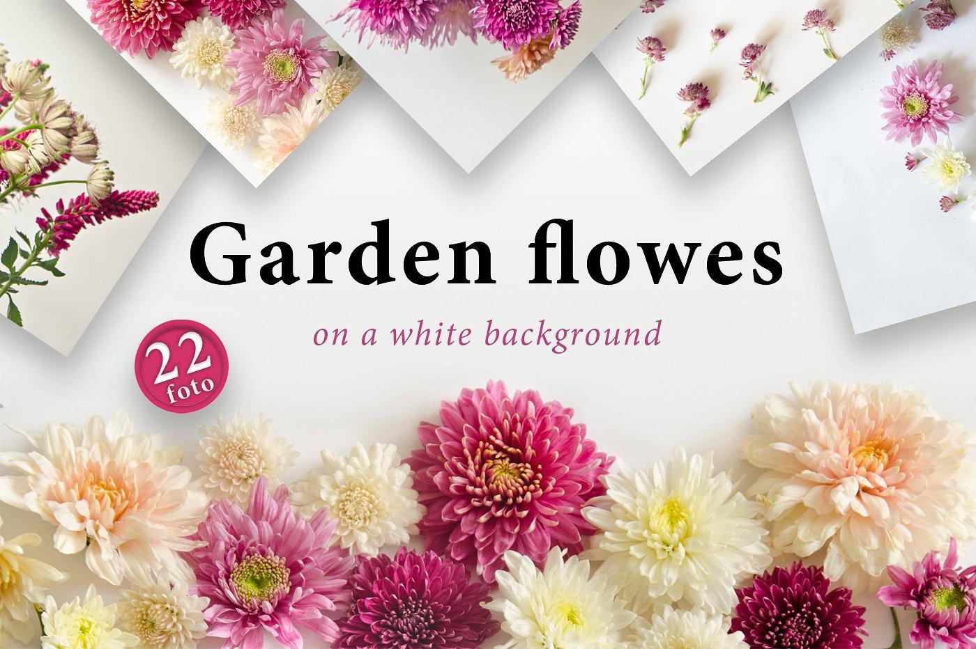 22款庭院花照片集合 Garden Flowers.22 Foto插图