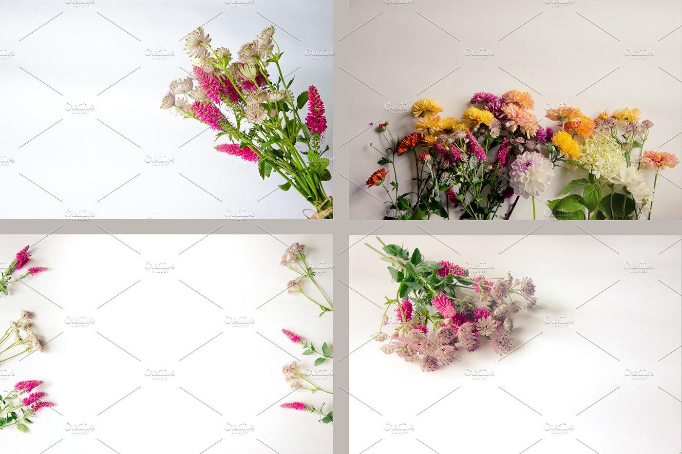 22款庭院花照片集合 Garden Flowers.22 Foto插图(5)