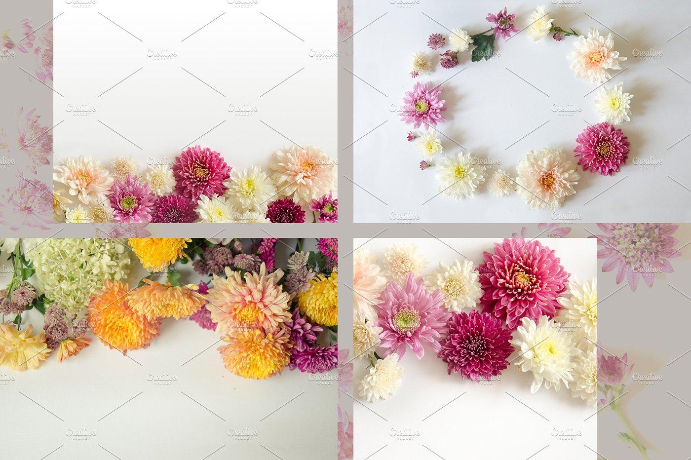 22款庭院花照片集合 Garden Flowers.22 Foto插图(3)