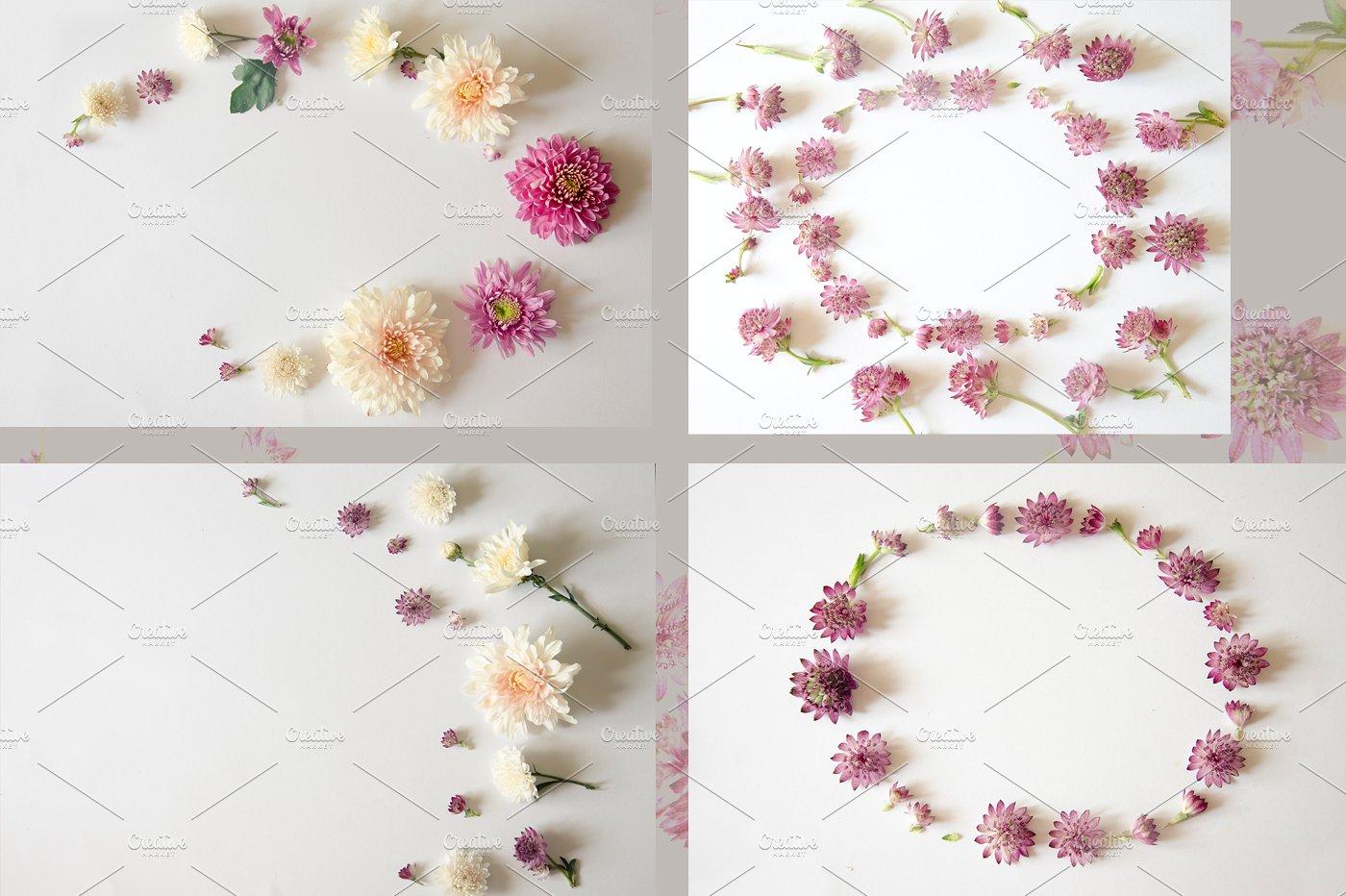 22款庭院花照片集合 Garden Flowers.22 Foto插图(2)