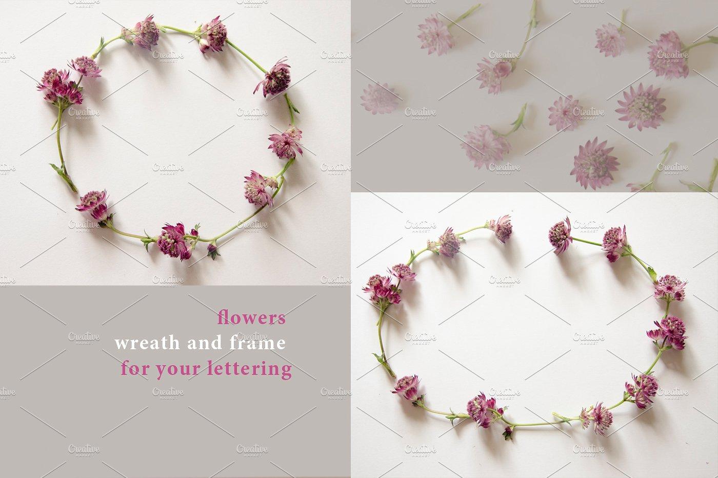 22款庭院花照片集合 Garden Flowers.22 Foto插图(1)