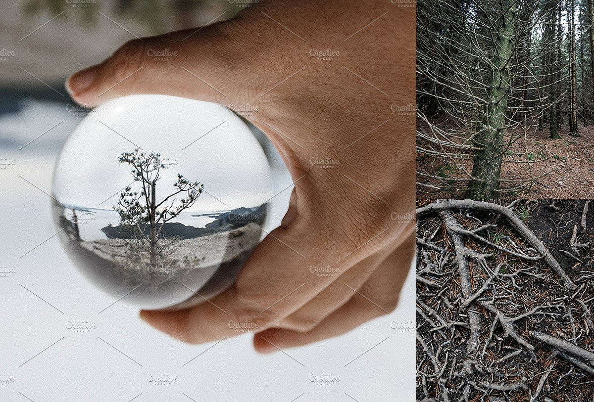 高清的挪威森林照片集 HD Norwegian Forest Photo Collection插图(3)