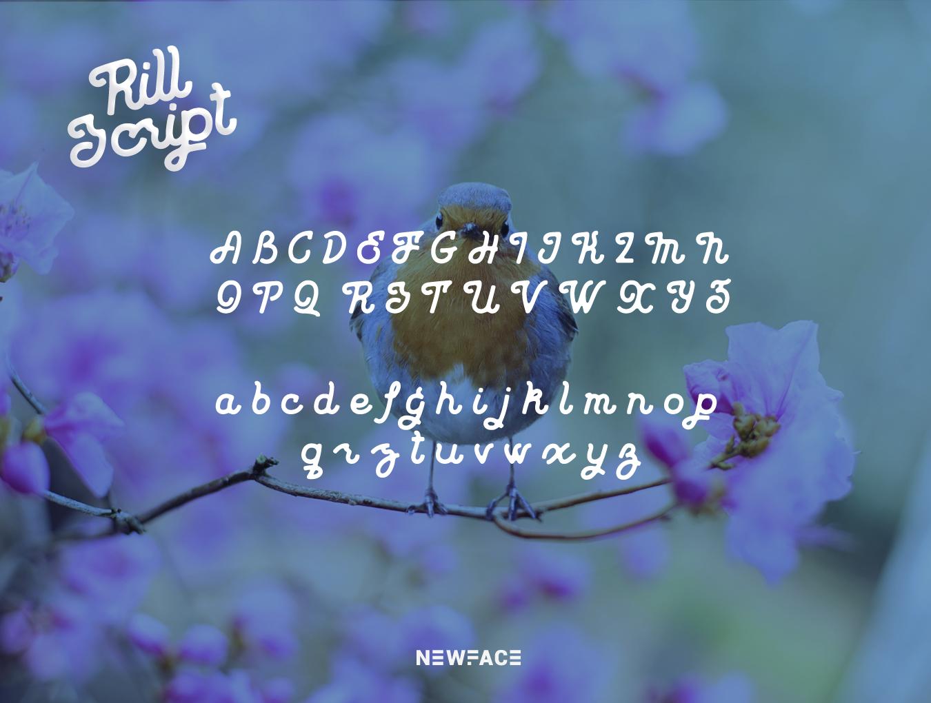 老式复古脚本拉丁语字体 Rill Script插图(3)