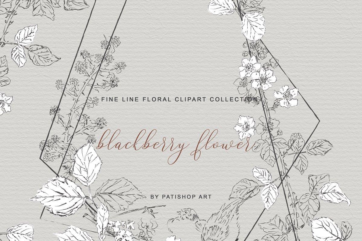 手绘细线艺术黑莓花卉剪贴画集 Hand Drawn Fine Line Art Clipart插图