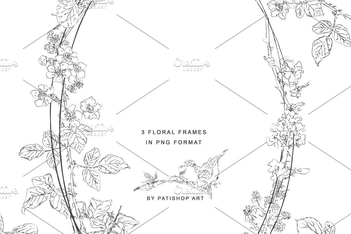 手绘细线艺术黑莓花卉剪贴画集 Hand Drawn Fine Line Art Clipart插图(3)
