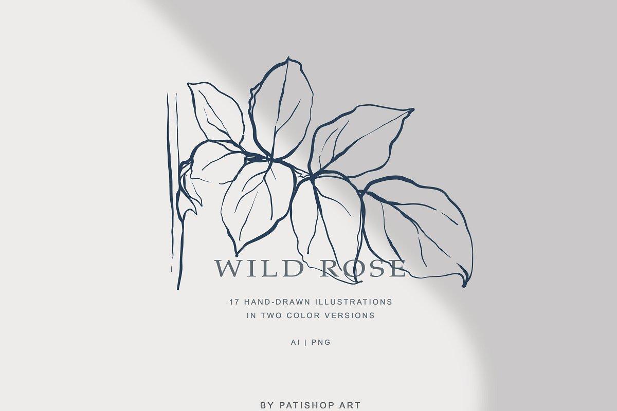 现代手绘玫瑰花简笔画矢量线稿图合集 Modern Hand Drawn Wild Rose Illustr插图(3)