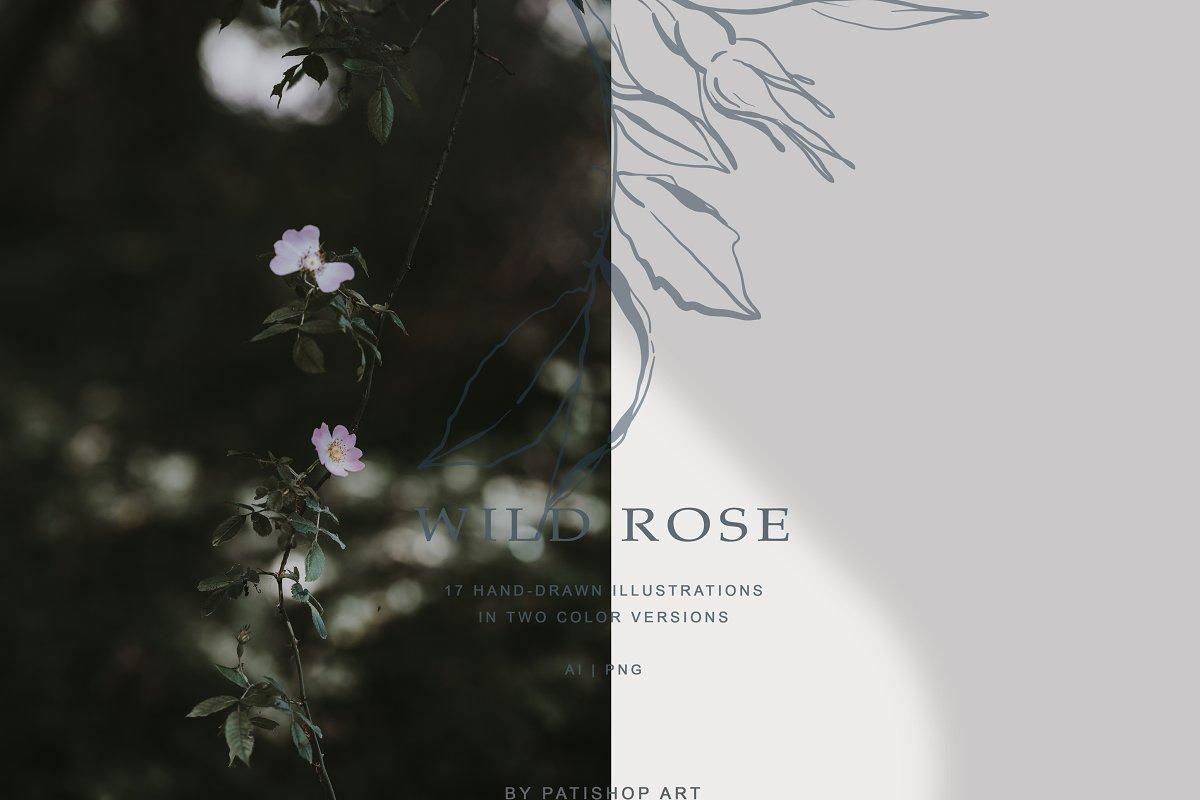 现代手绘玫瑰花简笔画矢量线稿图合集 Modern Hand Drawn Wild Rose Illustr插图(4)