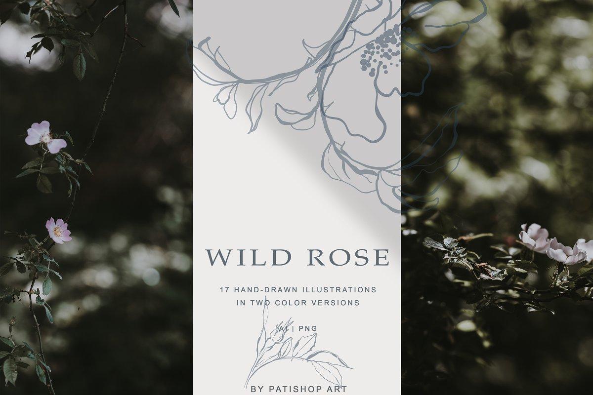 现代手绘玫瑰花简笔画矢量线稿图合集 Modern Hand Drawn Wild Rose Illustr插图(5)