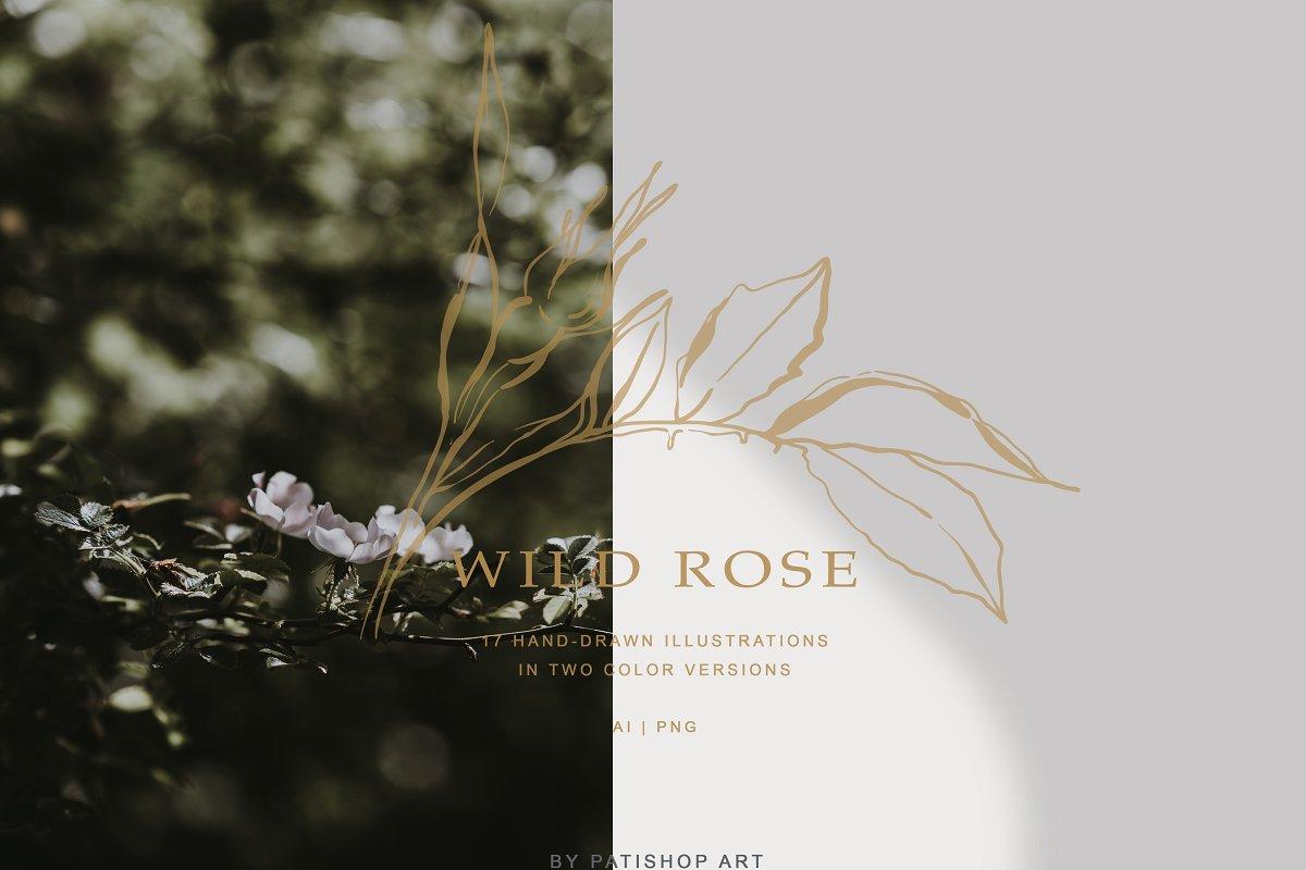 现代手绘玫瑰花简笔画矢量线稿图合集 Modern Hand Drawn Wild Rose Illustr插图(6)