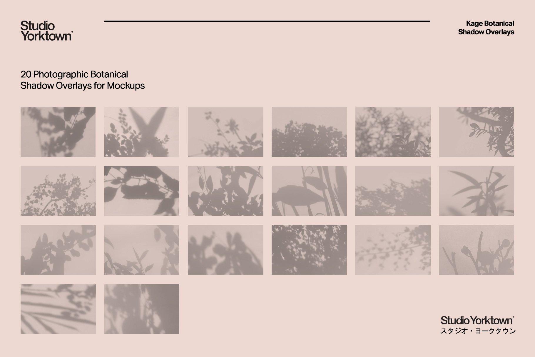 20款高清文艺优雅自然植物阴影投影PNG叠层图片 Kage – Botanical Shadow Overlays插图(1)