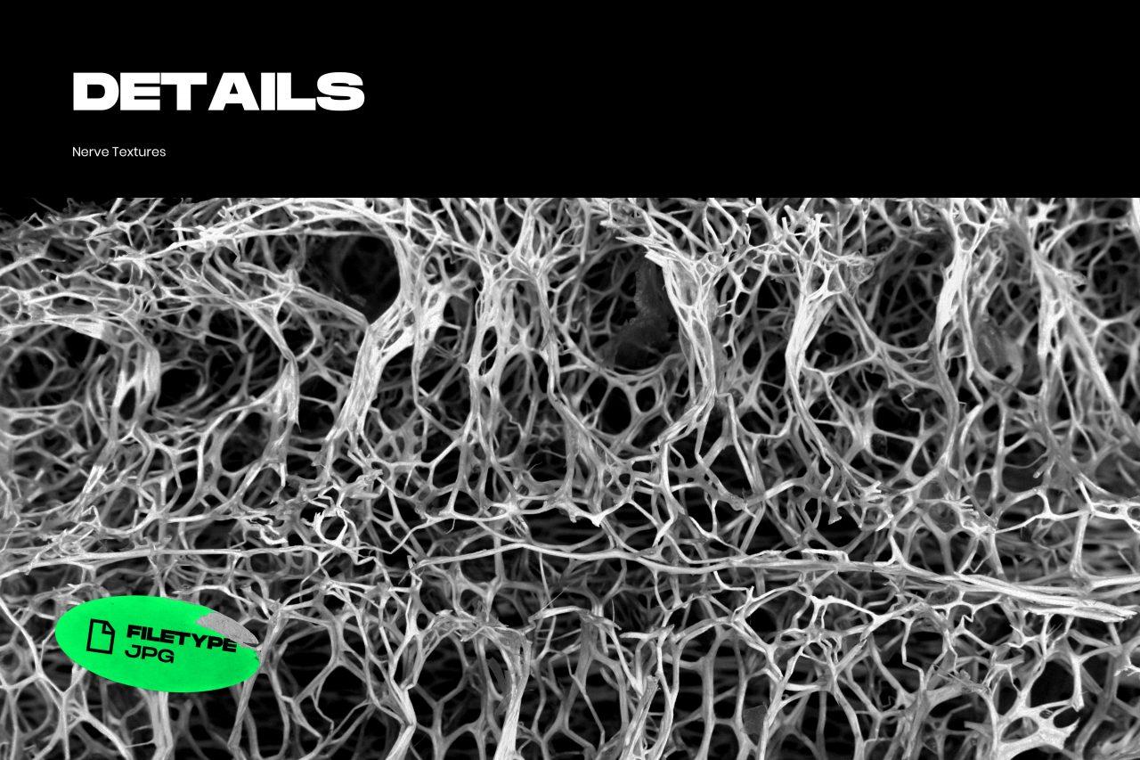 25款高清有机海绵纤维海报设计背景纹理JPG图片素材 Nerve Textures插图(6)