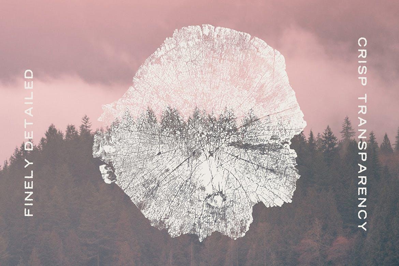 树桩木质背景纹理矢量素材 Wood Tree Stumps插图(3)