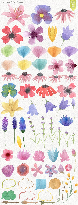 167种高清手绘花卉动物昆虫水彩剪贴画PNG素材 Forest Watercolor DIY插图(1)