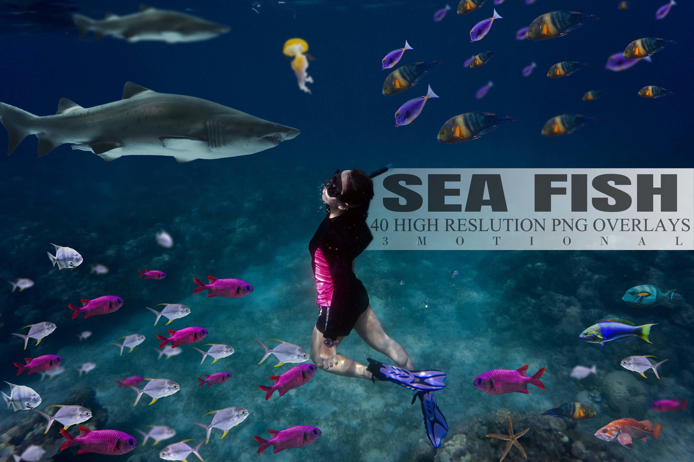 40款高清海洋鱼PS叠加图片素材 40 Sea Fish Overlays插图