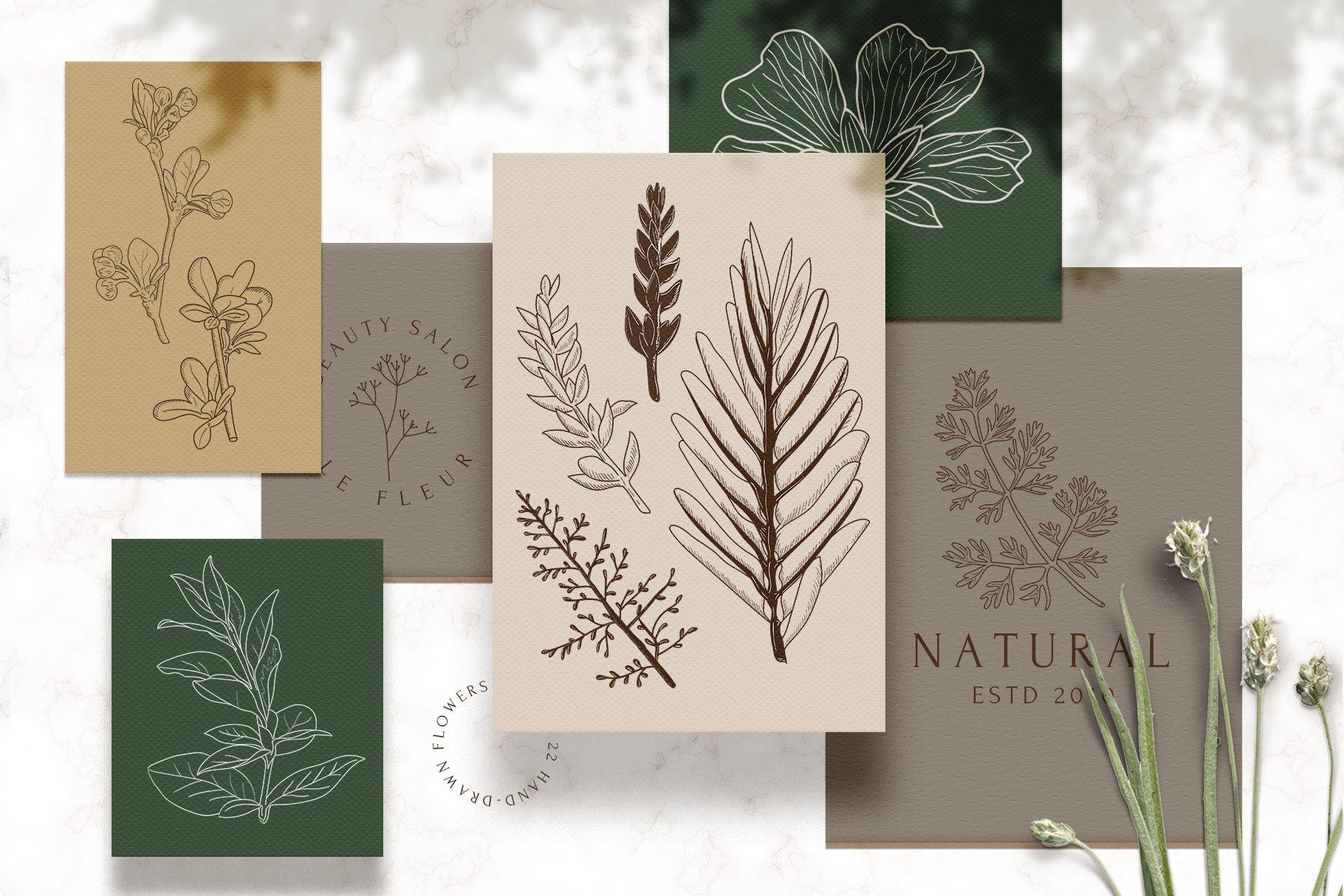 精美植物徽标标志设计AI矢量模板素材 BotanicalLogos & Illustrations插图(1)
