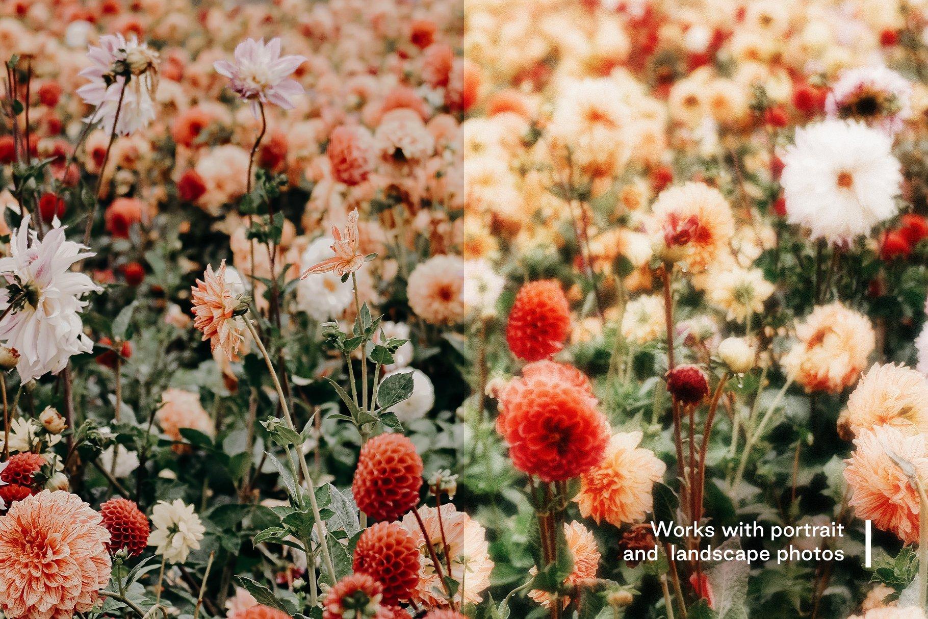 [淘宝购买] 梦幻发光柔和镜头聚焦效果摄影照片后期处理效果PS动作模板 Glow – Soft Lens Focus Action插图(1)
