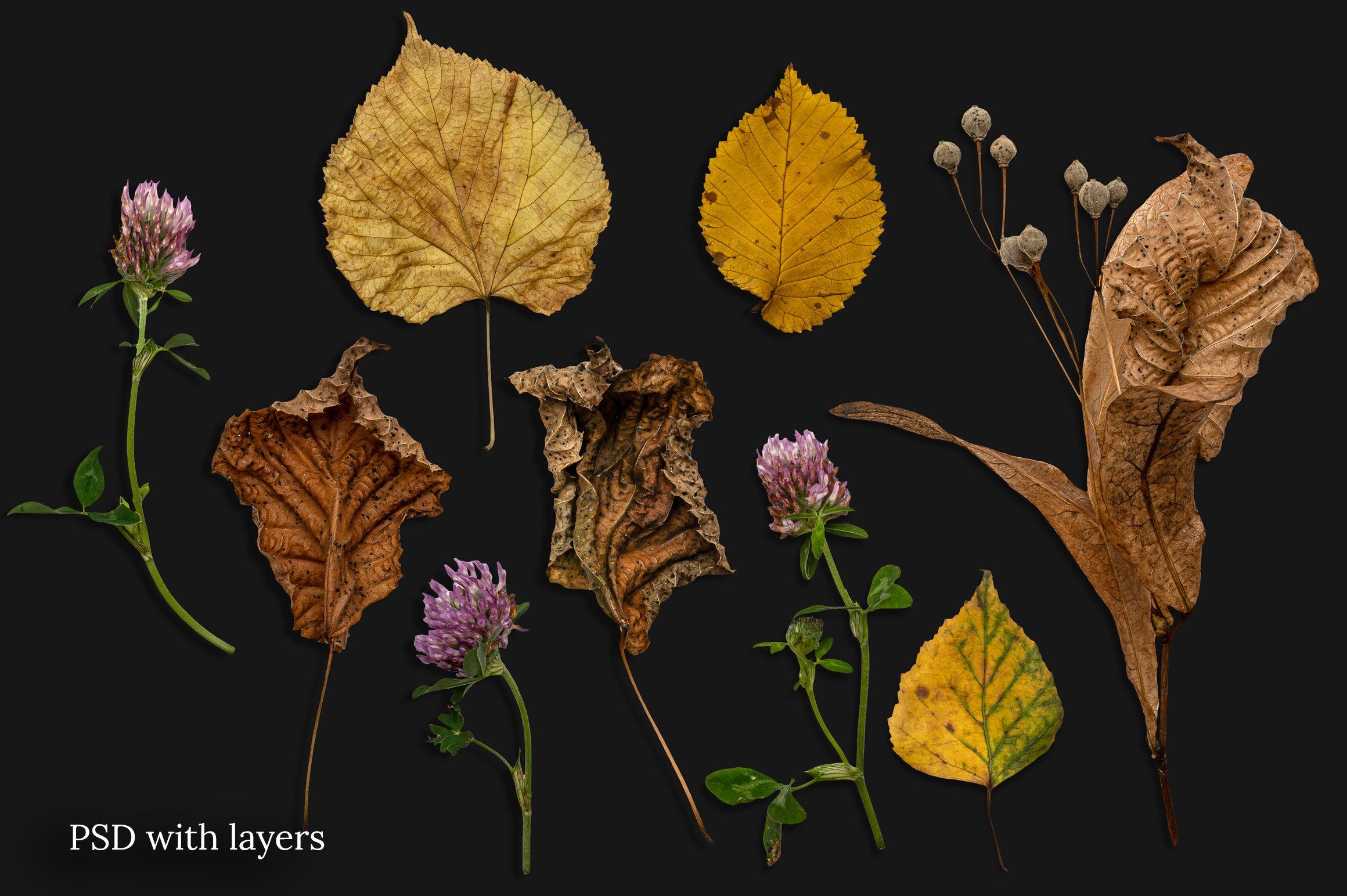 秋季森林元素场景背景图片素材 Autumn Forest Scene Creator插图(1)
