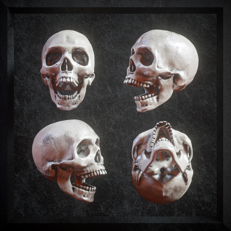 [淘宝购买] 炫酷3D渲染人类头骨骷髅FBX模型素材 3D Skull Models Predators Pack插图(2)
