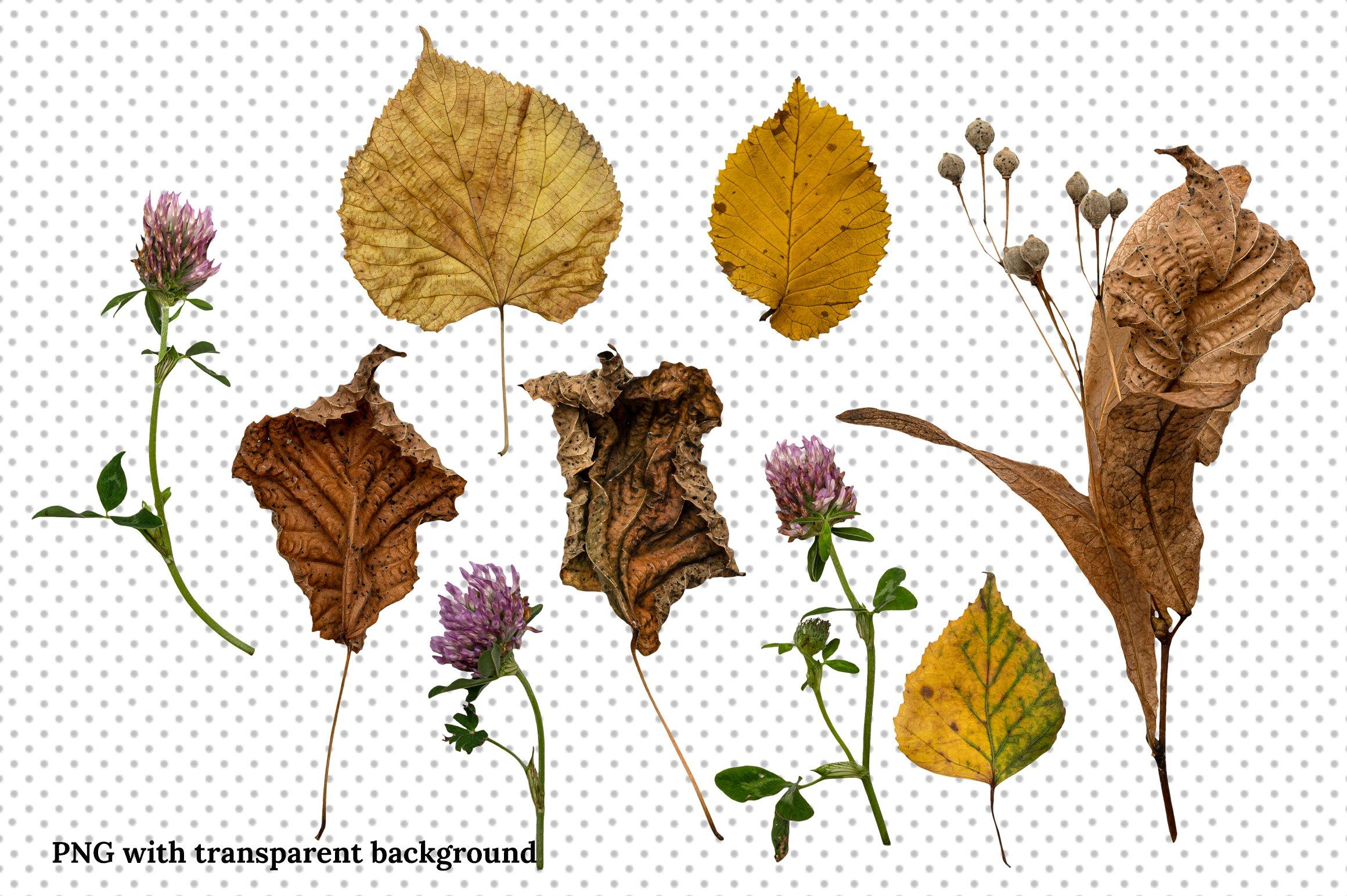 秋季森林元素场景背景图片素材 Autumn Forest Scene Creator插图(4)