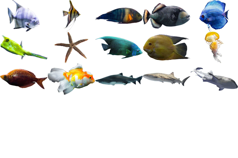 40款高清海洋鱼PS叠加图片素材 40 Sea Fish Overlays插图(5)