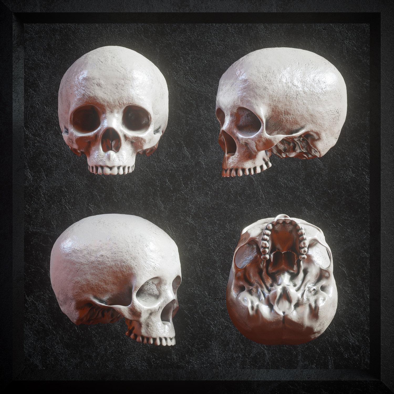 [淘宝购买] 炫酷3D渲染人类头骨骷髅FBX模型素材 3D Skull Models Predators Pack插图(5)