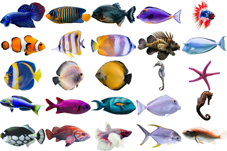 40款高清海洋鱼PS叠加图片素材 40 Sea Fish Overlays插图(6)