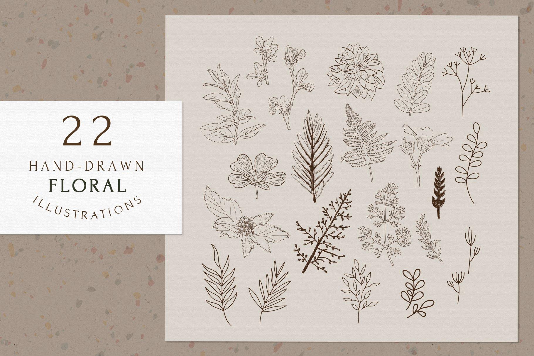 精美植物徽标标志设计AI矢量模板素材 BotanicalLogos & Illustrations插图(6)