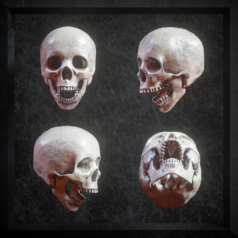 逼真3D人类头盖骨模型PNG免抠图片素材 Billelis 3D Skull Model Pack VOL1插图(2)