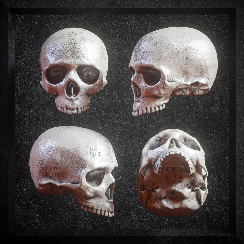 逼真3D人类头盖骨模型PNG免抠图片素材 Billelis 3D Skull Model Pack VOL1插图(5)