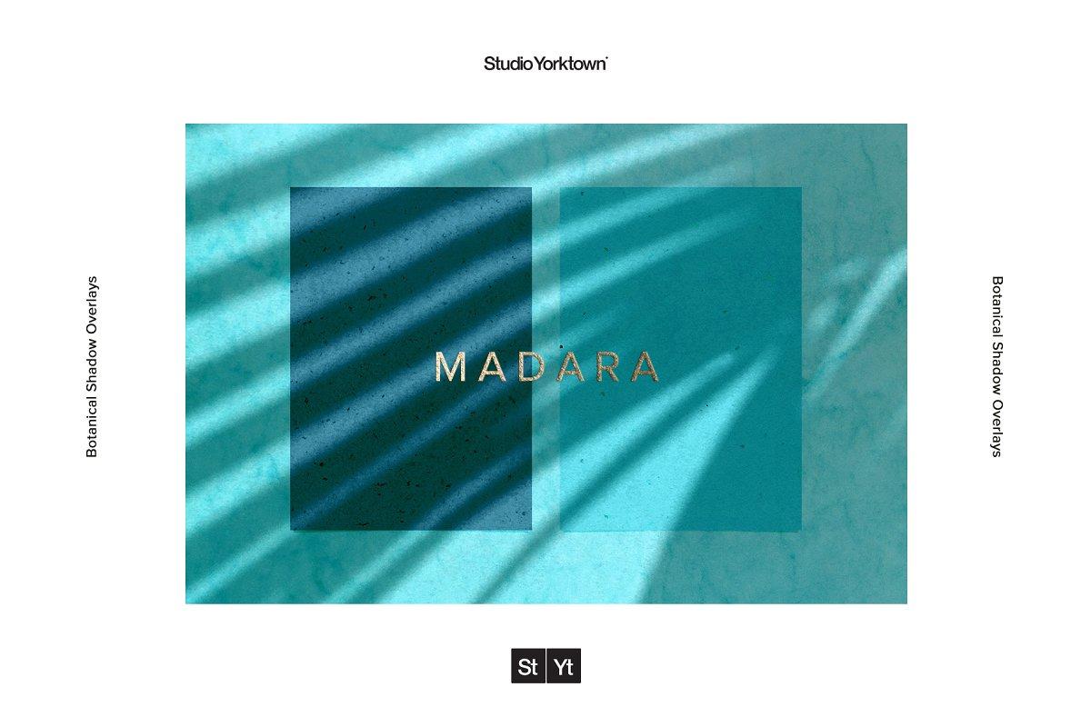 [淘宝购买] 15款高清植物阴影叠加PNG透明免抠图片素材 Madara – Botanical Shadow Overlays插图