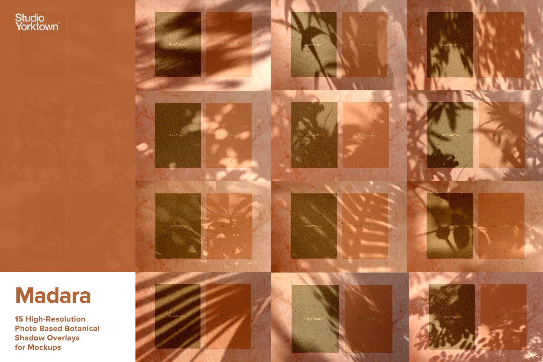 [淘宝购买] 15款高清植物阴影叠加PNG透明免抠图片素材 Madara – Botanical Shadow Overlays插图(1)
