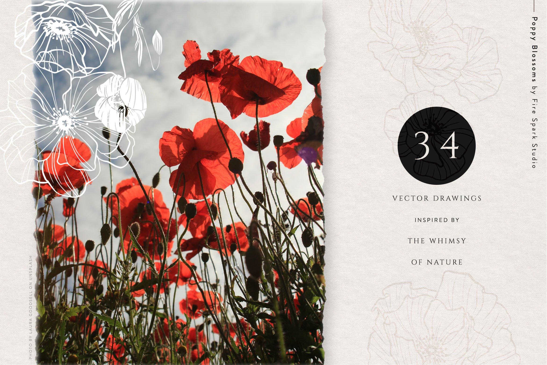 精美优雅艺术装饰花卉图案插画PNG透明图片设计素材 Poppy Blossoms Vector Illustrations插图(4)