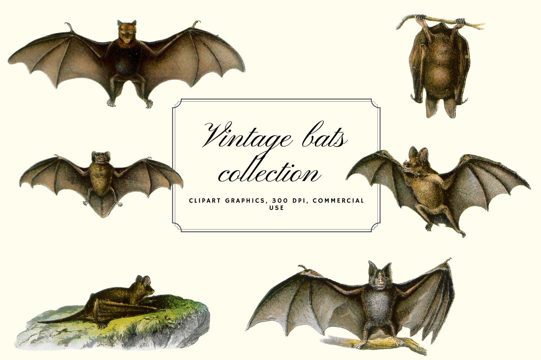 10个高清蝙蝠背景PNG免抠图片素材 Vintage Bats Collection, Creepy Graphics插图