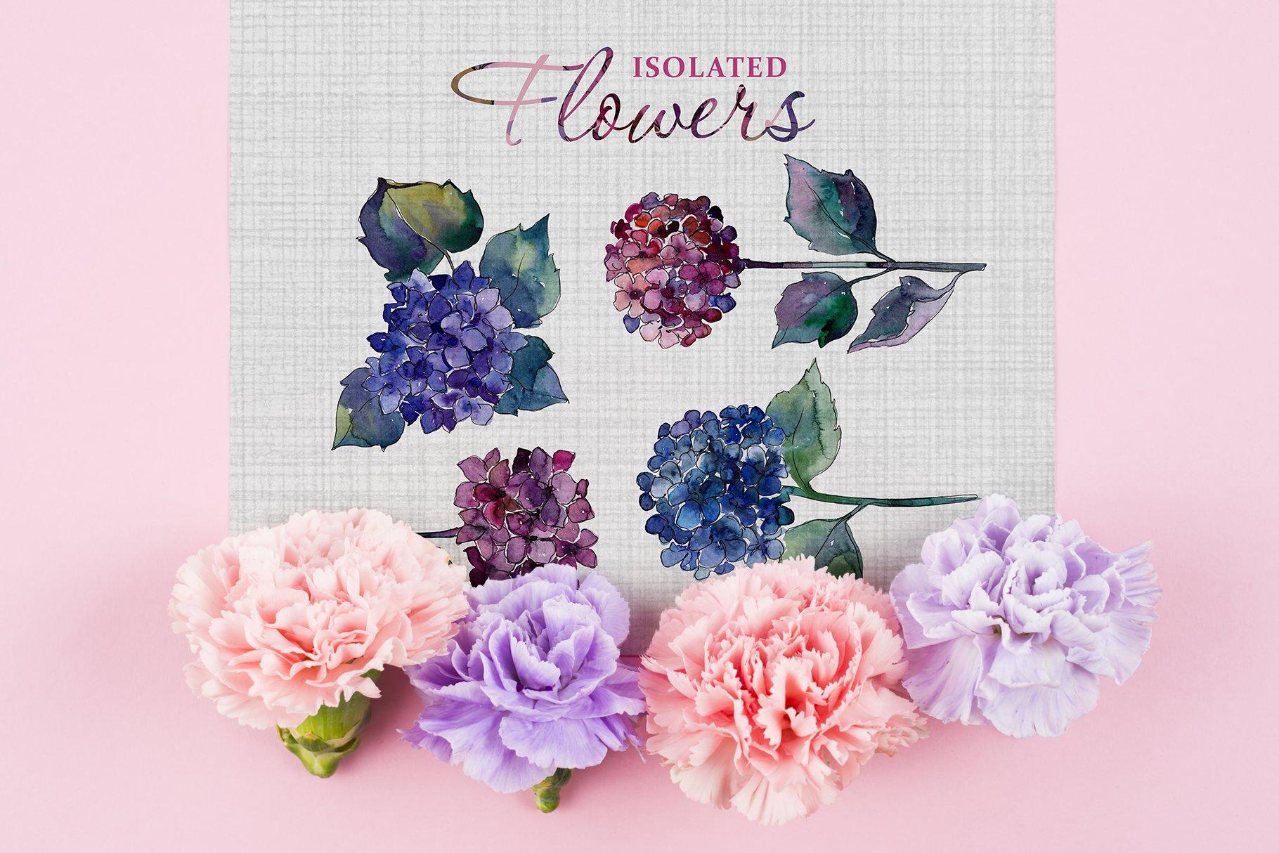 51个花卉植物水彩剪贴画插图图片素材 Gortenzia Magic Watercolor PNG插图(6)