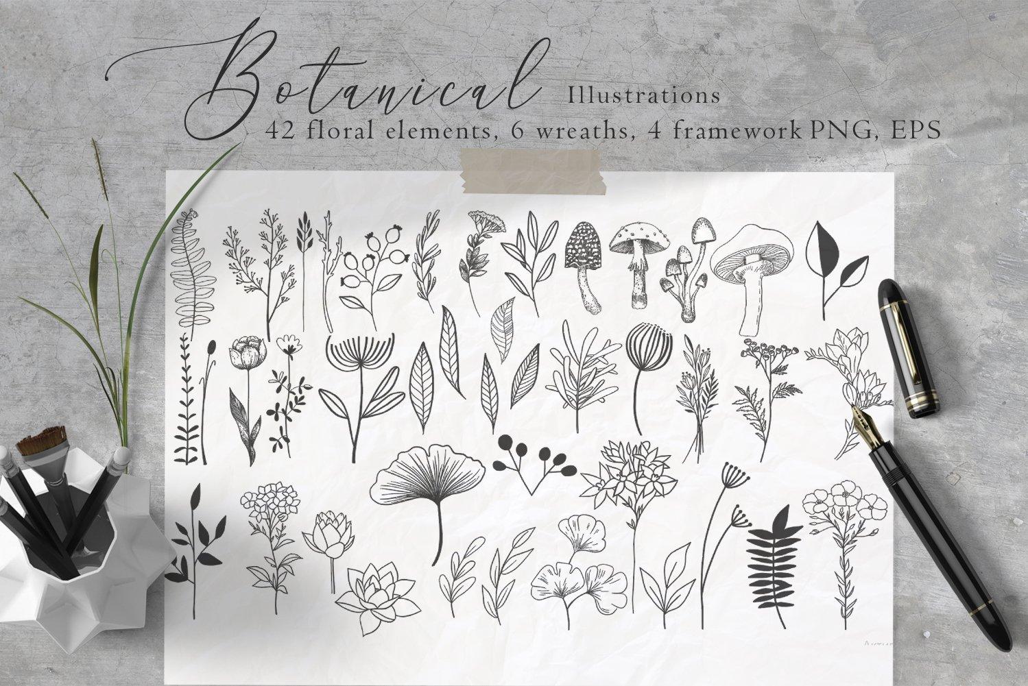 黑白线条手绘插画矢量设计素材 Floral Botanical Illustrations插图
