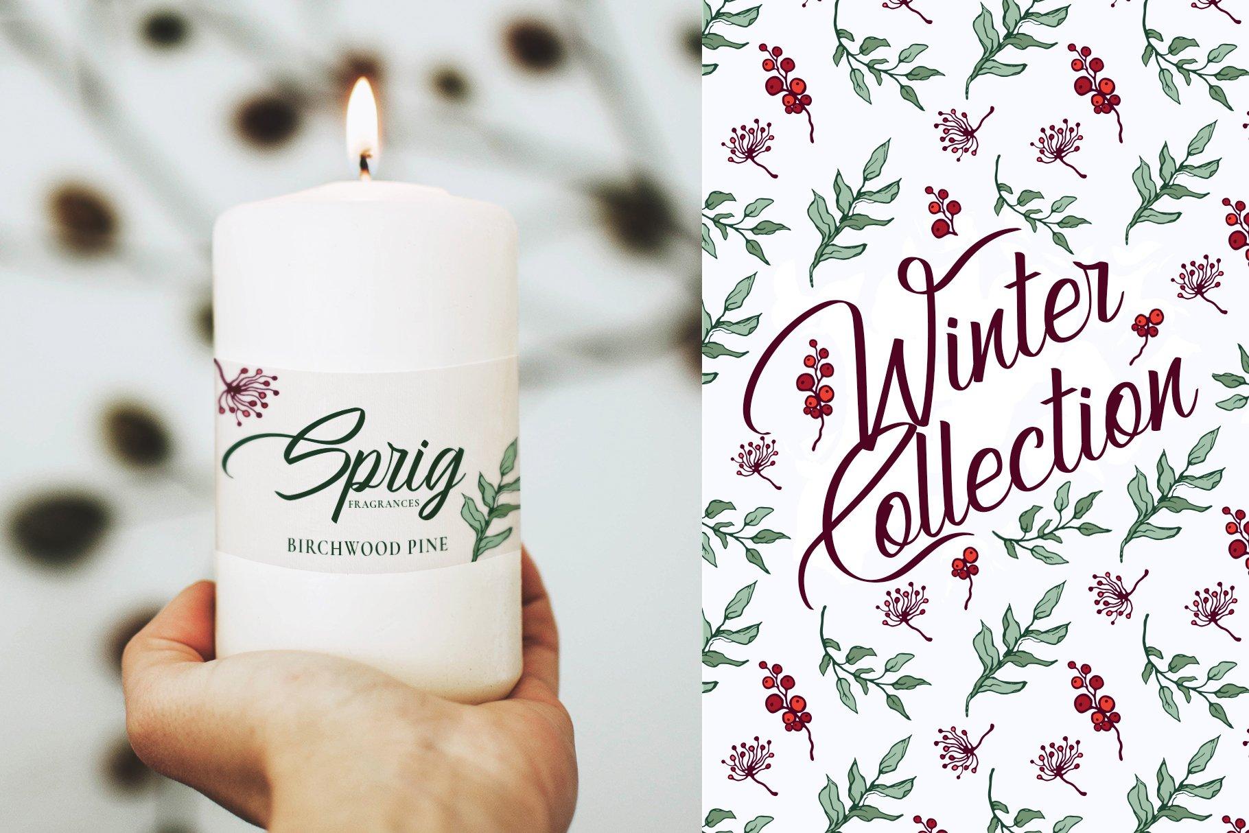 150多款时尚优雅花卉框架抽象形状手绘插画设计素材 Winter Floral Patterns & Elements插图17