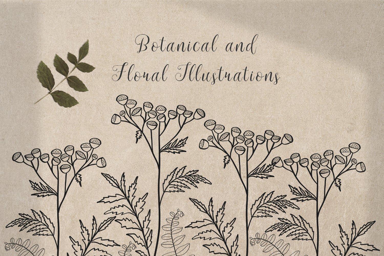 黑白线条手绘插画矢量设计素材 Floral Botanical Illustrations插图8
