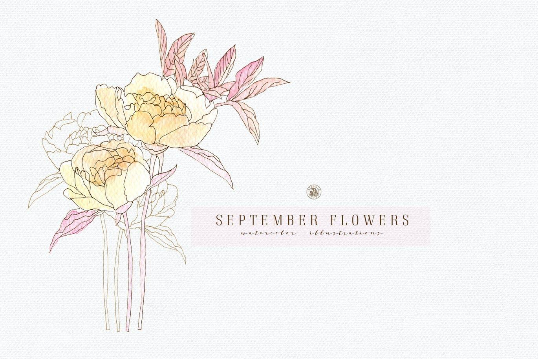九月花花卉手绘水彩画PNG透明图片素材 September Flowers vol. 2插图1