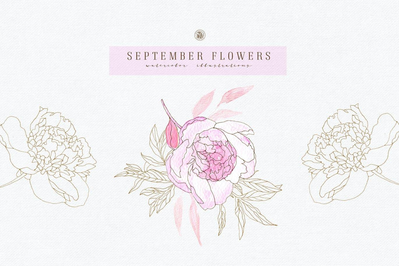 九月花花卉手绘水彩画PNG透明图片素材 September Flowers vol. 2插图2