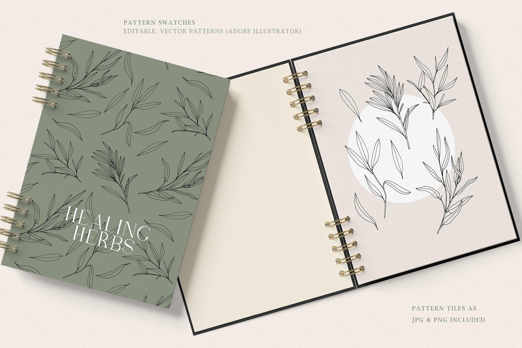 优雅中药草药花草手绘无缝隙矢量图案设计素材 Herbs Patterns & Illustrations插图1