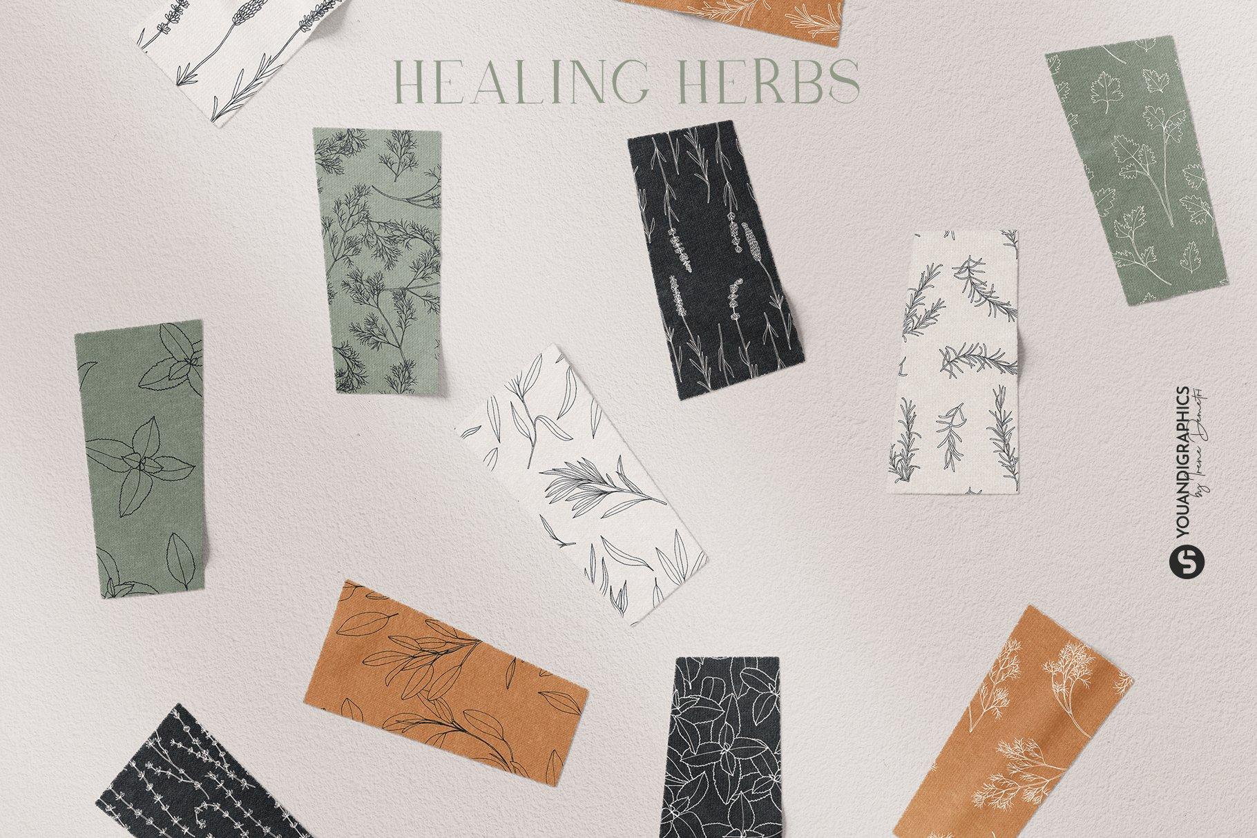优雅中药草药花草手绘无缝隙矢量图案设计素材 Herbs Patterns & Illustrations插图2