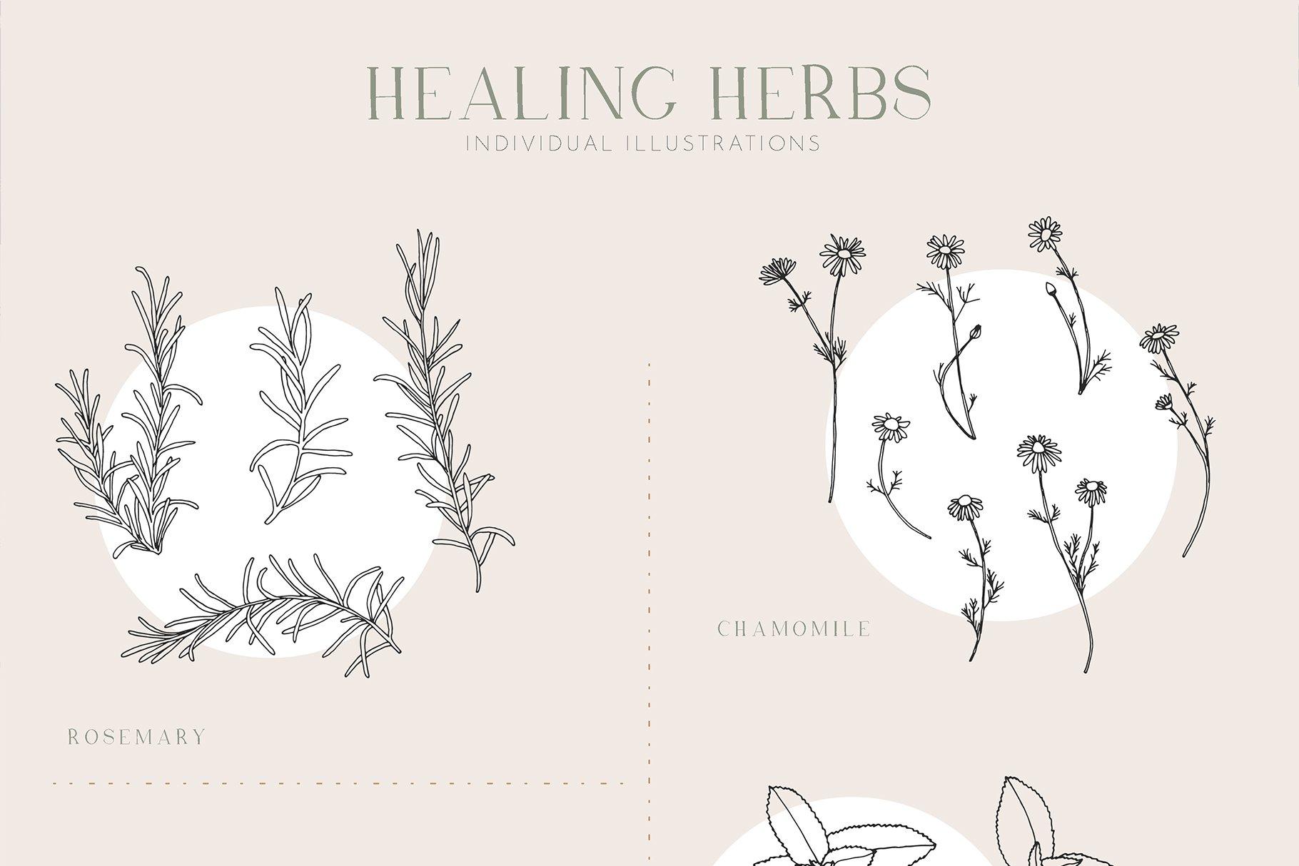 优雅中药草药花草手绘无缝隙矢量图案设计素材 Herbs Patterns & Illustrations插图5