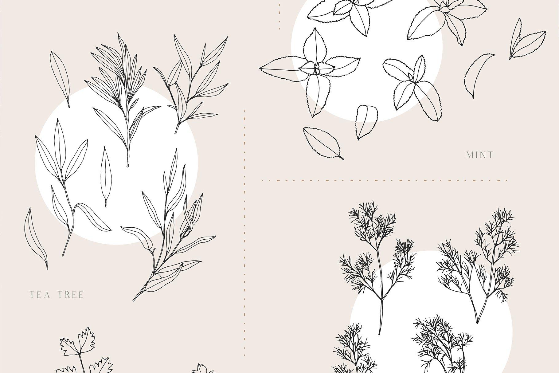 优雅中药草药花草手绘无缝隙矢量图案设计素材 Herbs Patterns & Illustrations插图6