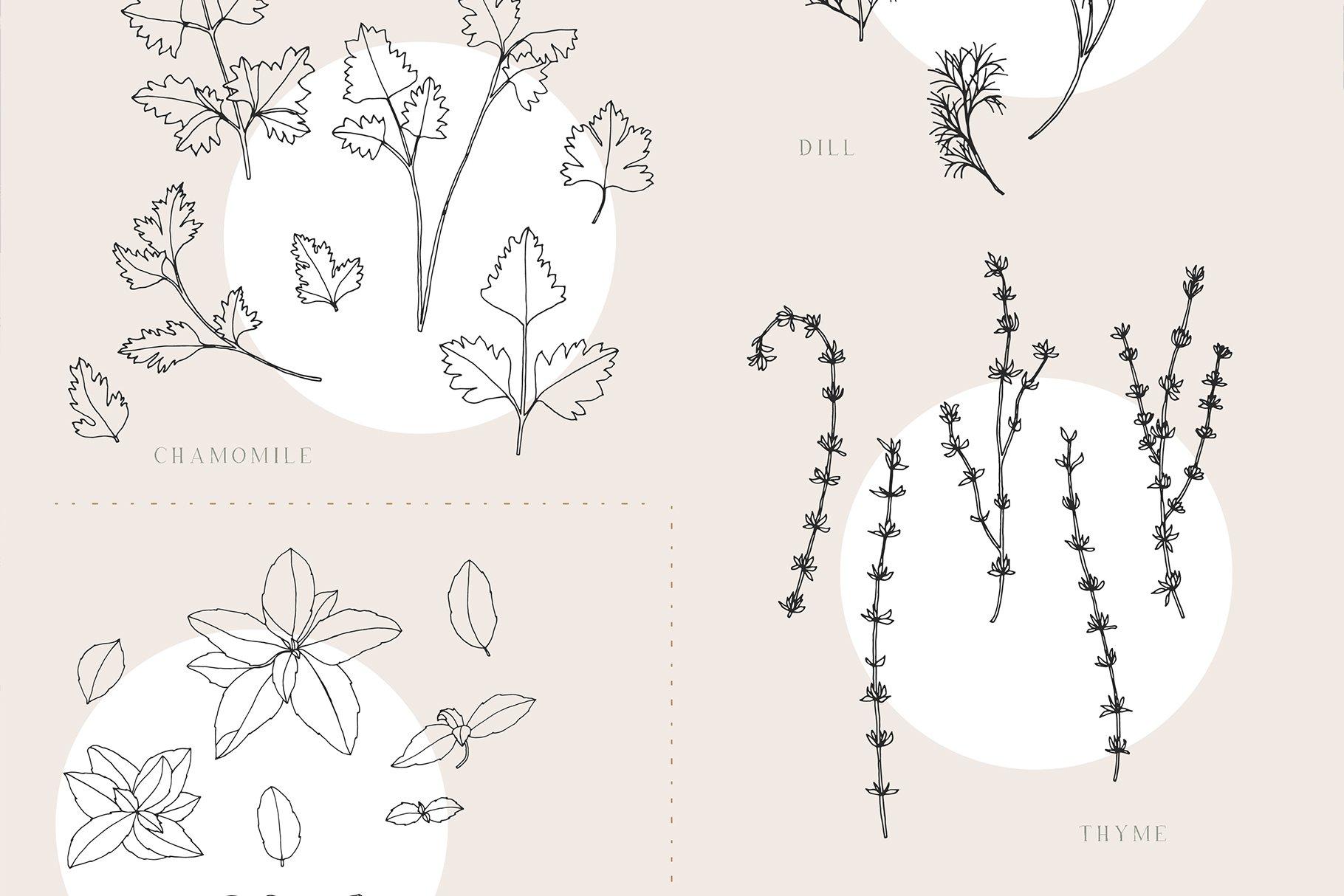 优雅中药草药花草手绘无缝隙矢量图案设计素材 Herbs Patterns & Illustrations插图7