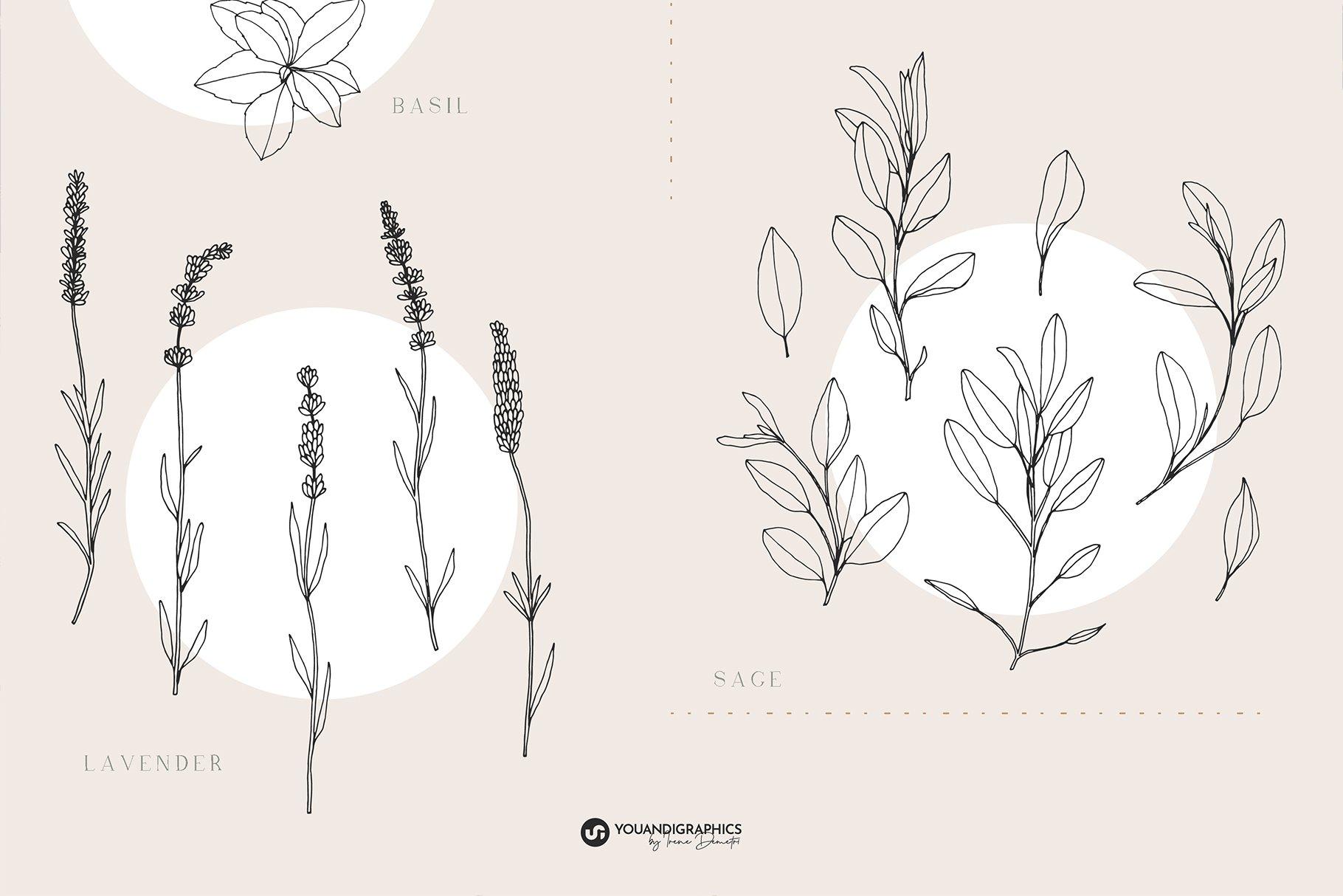 优雅中药草药花草手绘无缝隙矢量图案设计素材 Herbs Patterns & Illustrations插图8