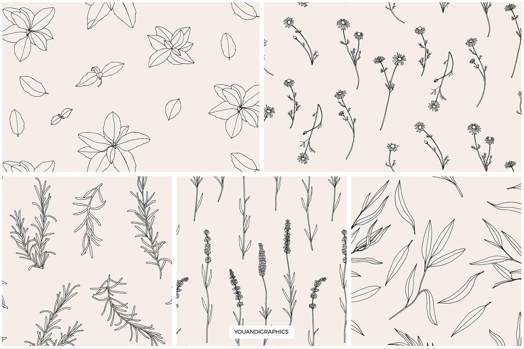 优雅中药草药花草手绘无缝隙矢量图案设计素材 Herbs Patterns & Illustrations插图9