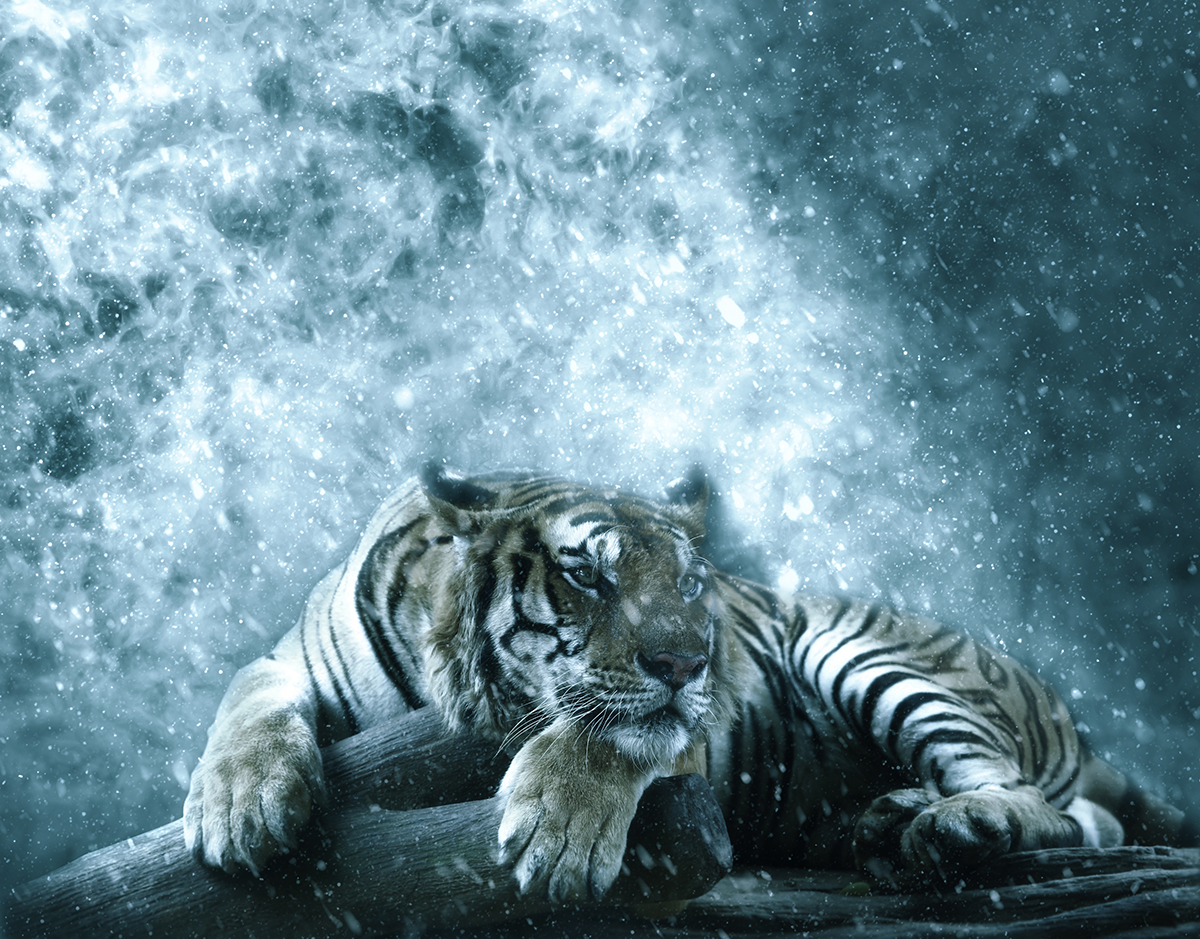 梦幻暴风雪效果照片处理特效PS动作模板 Ice Storm Action for Photoshop CS6+插图4