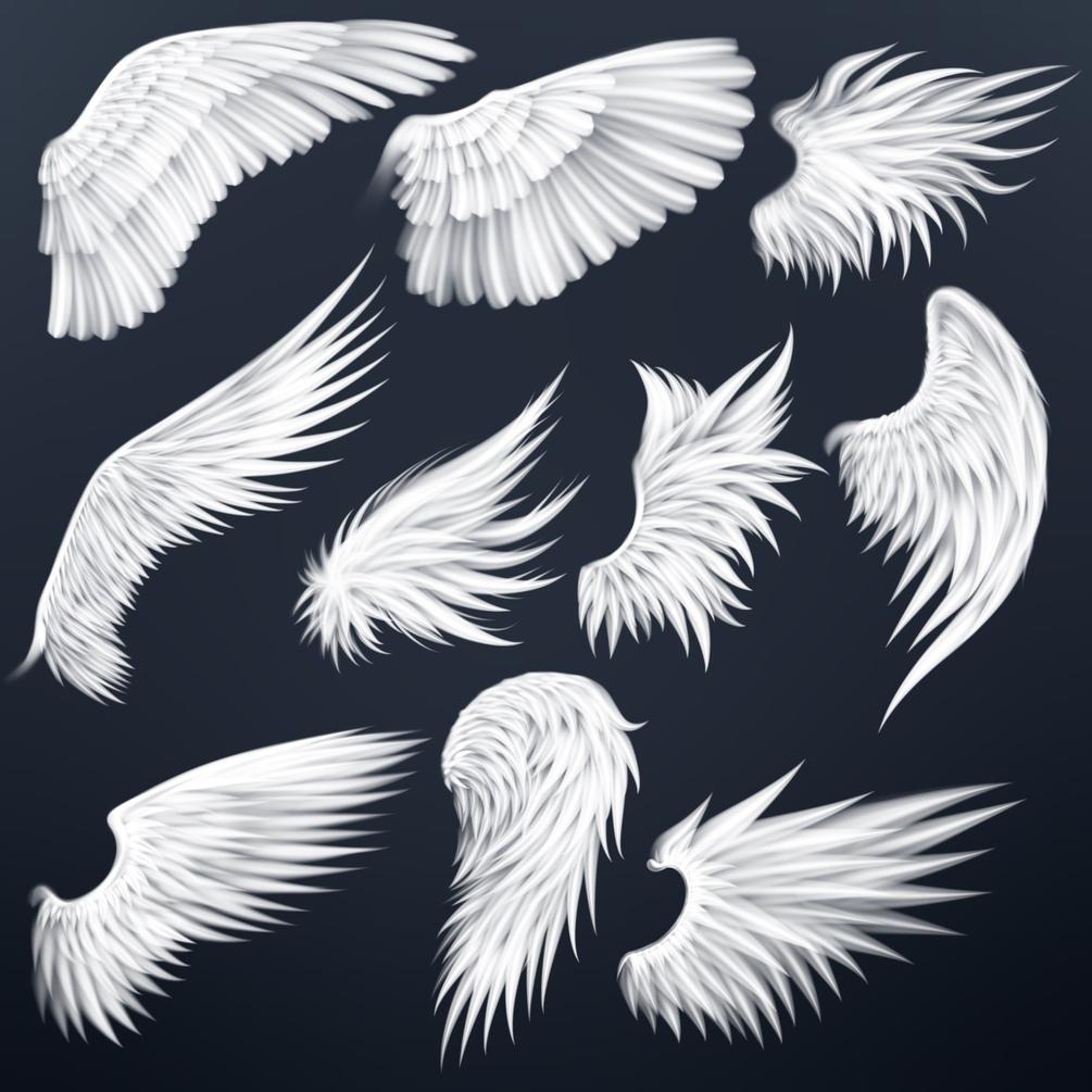 20个飞行动物翅膀艺术绘画Procreate笔刷素材 Wing Stamps for Procreate插图1